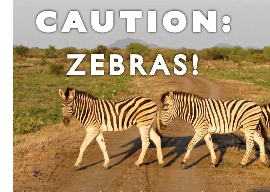 Caution Zebras